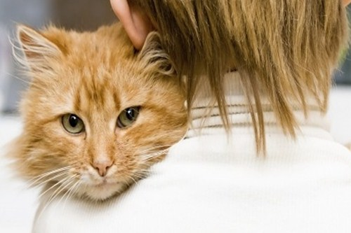 health benefits of living with cats