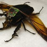 10 Bizarre Attempts to Weaponize Insects