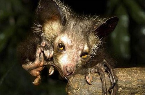 Ugliest Animals: Top 10 most ugly animals in the world ...