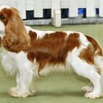 Top 10 Most Adorable English Dogs