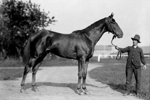Best Race Horses