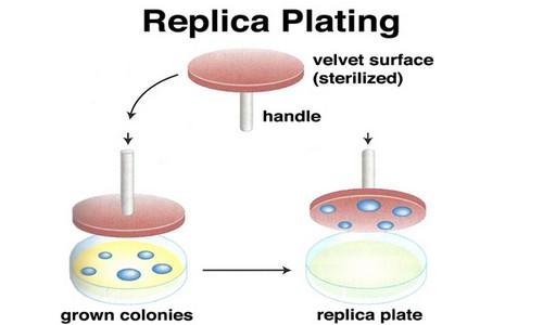 Replica Plating