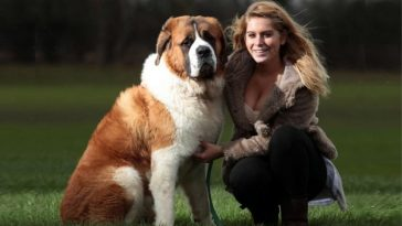 World's Biggest Dog Breed