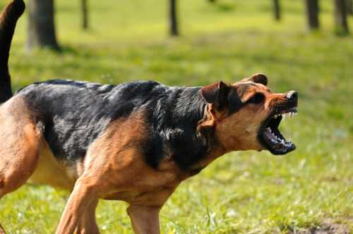 Top 10 Bad Dog Behaviors