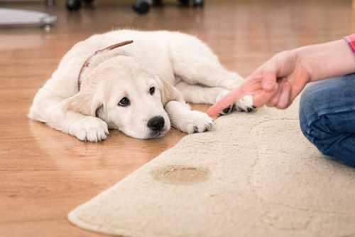 Dog Marking & House Soiling