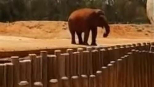 The Killer Elephant Of Morocco
