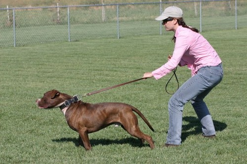 dogs pull on the leash