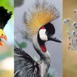 Top 10 Beautifully Crowned Birds