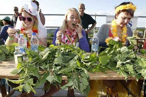 World Stinging Nettle Eating Championship