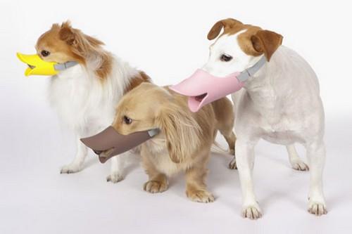 Quack- Duck Bill Muzzle For Dog