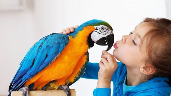 Best Birds Pets