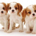 10 Dog Breeds That Have Most Adorable Puppies