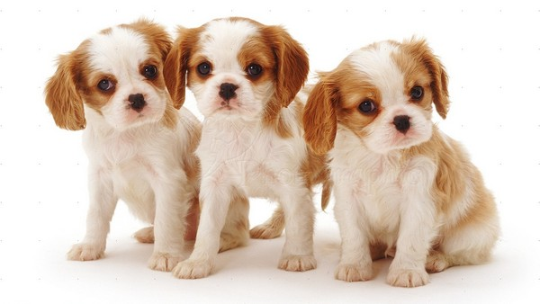 10 Dog Breeds That Have Most Adorable Puppies Cutest Puppies