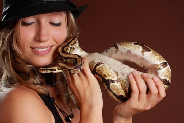 Pet Snakes