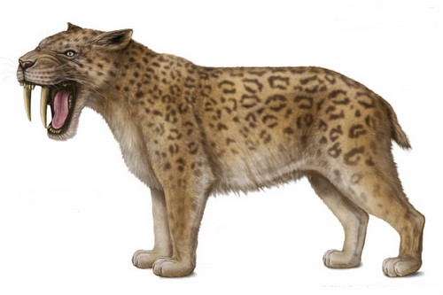 Saber Toothed Cats