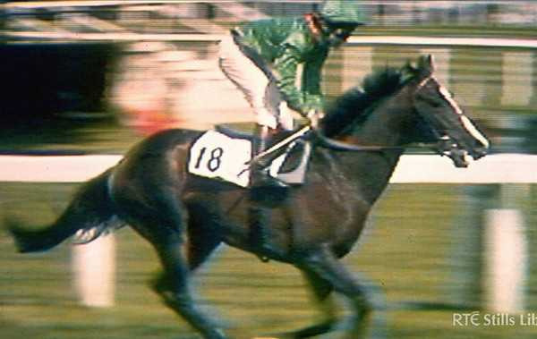 Shergar the champion horse