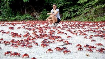 Christmas Island Crab migration Amazing