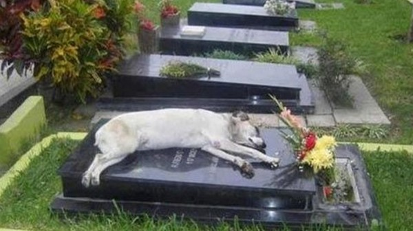 The dog that never left