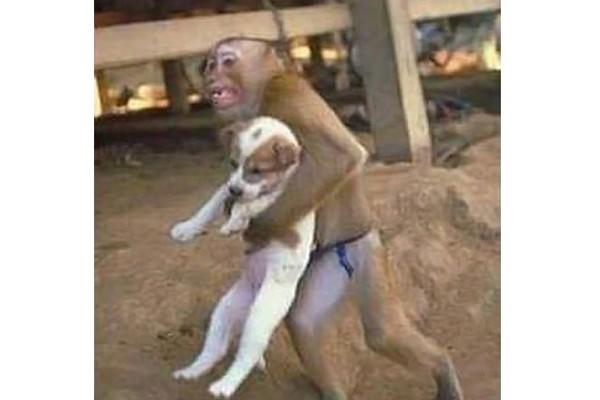 The savior monkey
