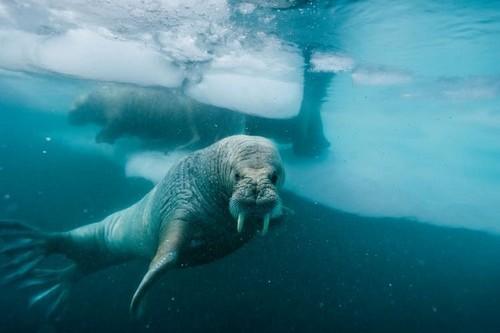 Last Underwater Selfie