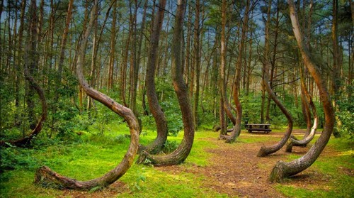 Hoia Forest Romania