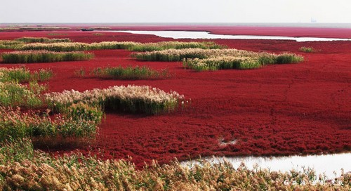 Incredible Red Beach in Panjin China