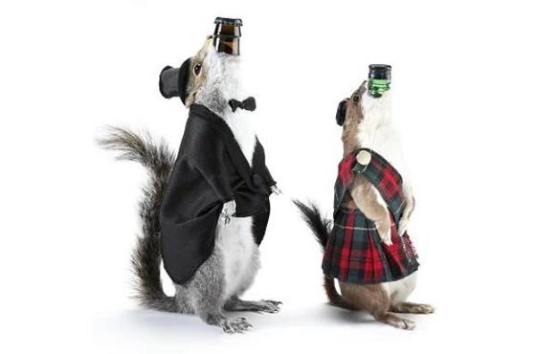 Scotch Squirrel Beer