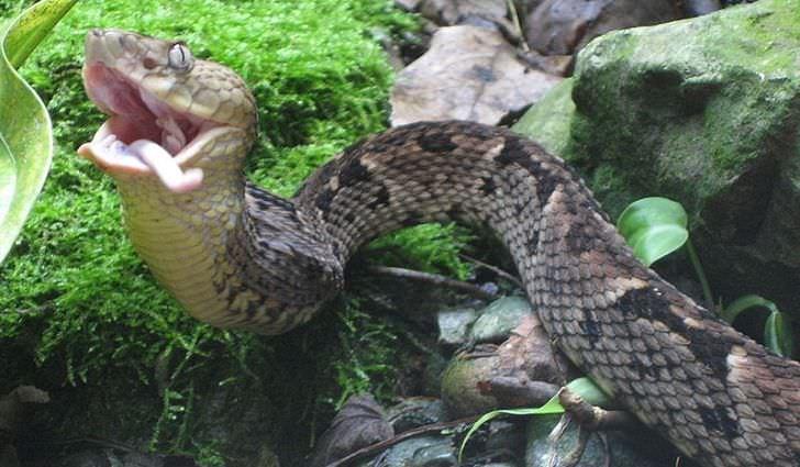 Brazil's Forbidden Snake Island