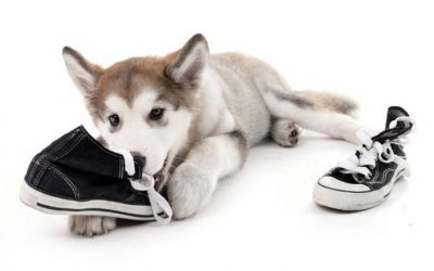 Dog Behaviors - 10 Things Your Dog Does and What It Means