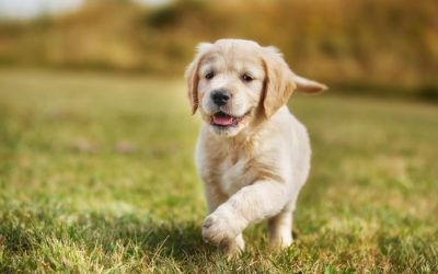 Things You Must Teach Your Puppy