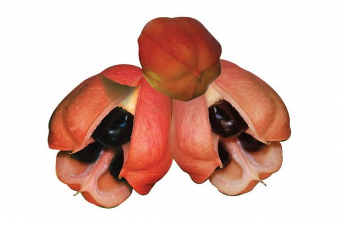 Ackee Most Poisonous Foods