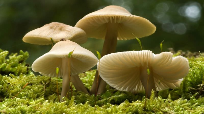 Most Poisonous Foods Wild mushrooms