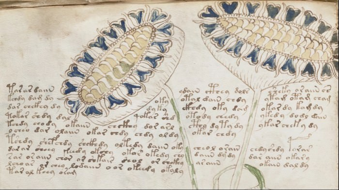The Voynich Manuscript Weirdest Discoveries Ever Made