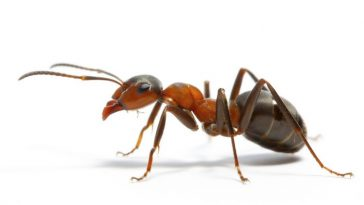 Ant-Most Intelligent Animals