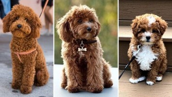 Family-Dog-Breeds-Best-Family-Dogs