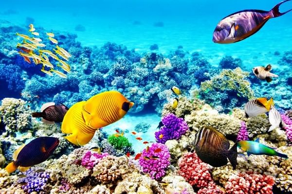 The Great Barrier Reef Things to Do in Queensland