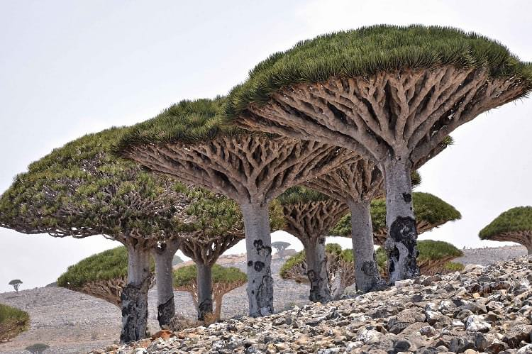 Socotra Island_Breathtaking Places on Earth