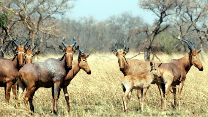Pendjari National Park