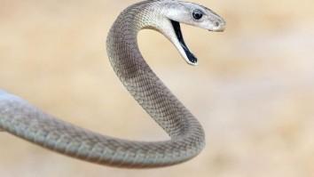 deadliest snakes