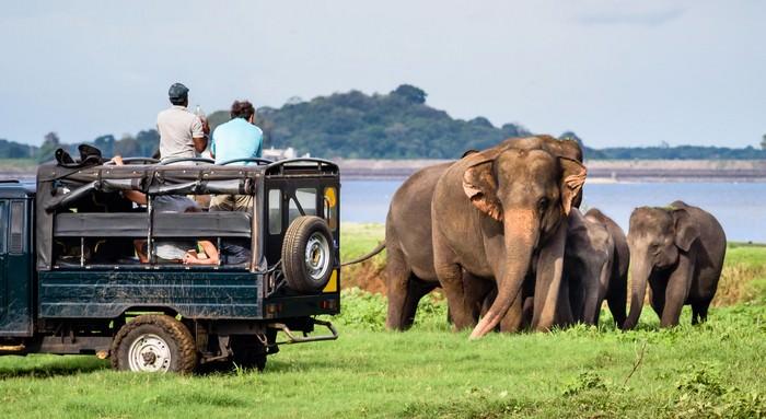 Yala National Park travel destinations in Sri Lanka