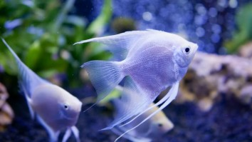 Best Aquarium Fishes