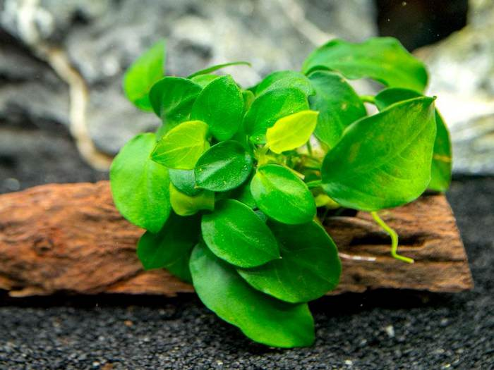 best aquarium plants