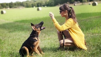 German Shepherd Trainable Family Dog Breeds