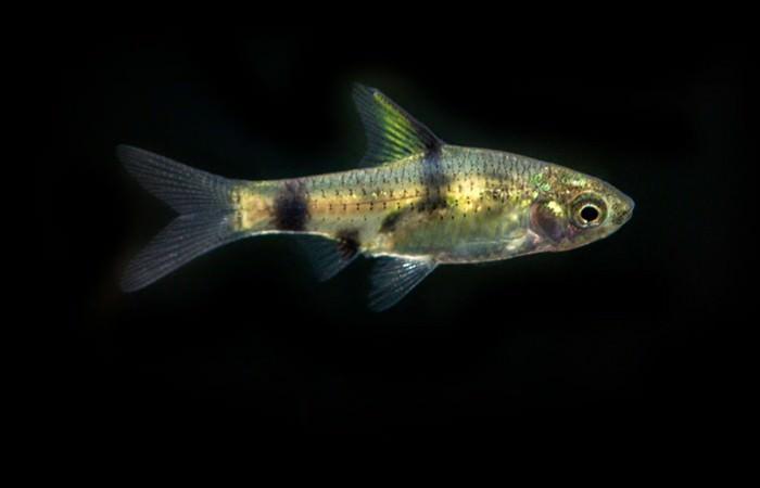 Best Aquarium Fishes