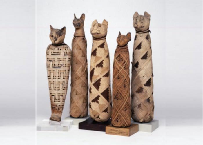 Cat mummies, Egypt 30BC