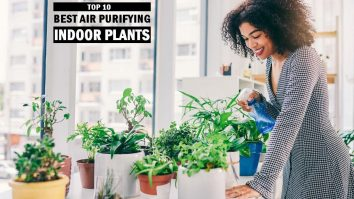 Best Air Purifying Indoor Plants
