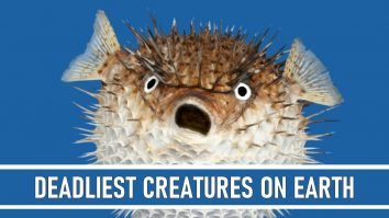 Deadliest Creatures on Earth